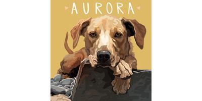 Aurora Pet Products
